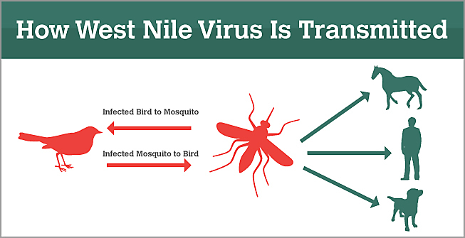 West Nile Virus Detected in Mosquito in Twin Falls County""